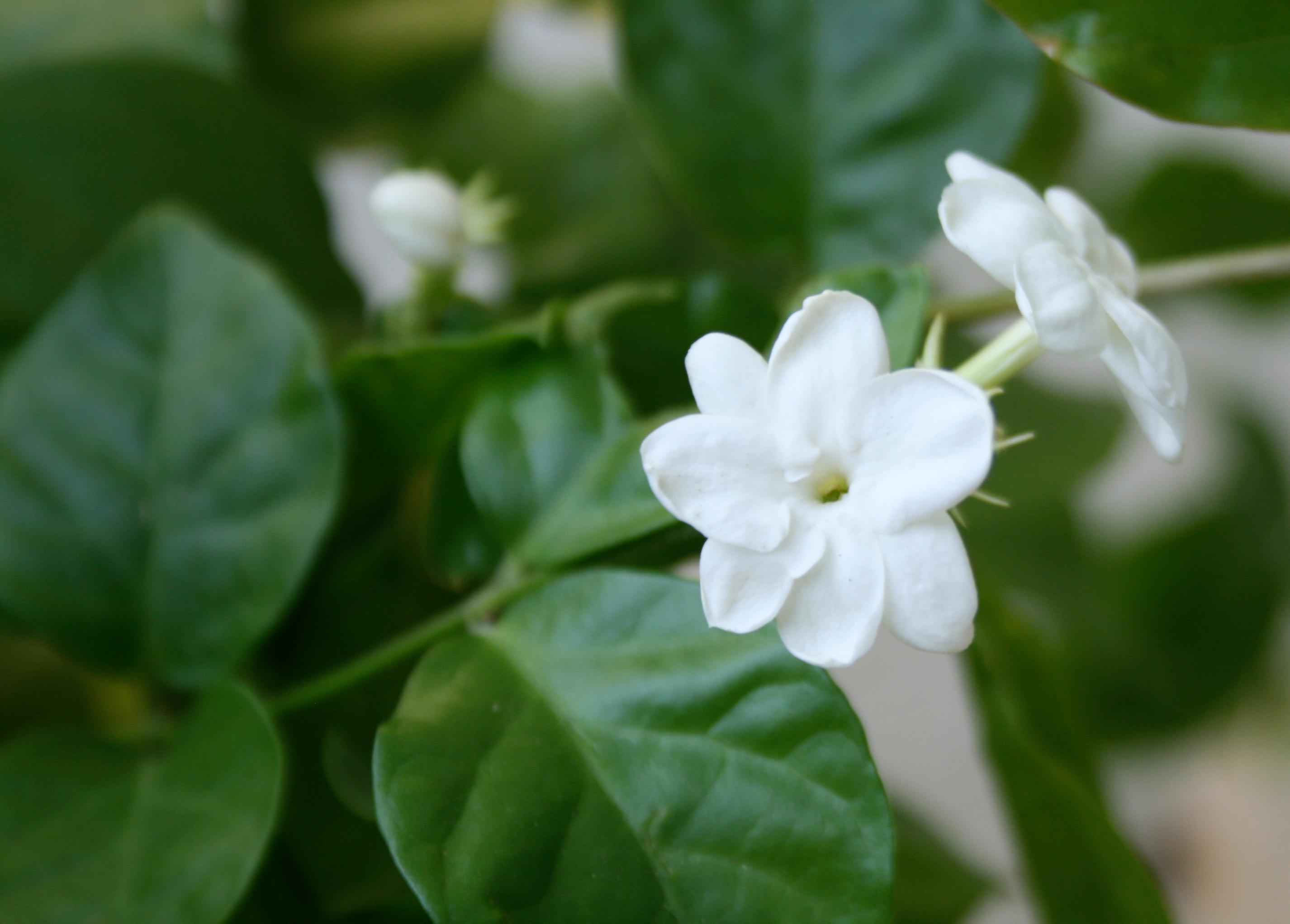 Survival Phrases In Tamil In The Land Of Jasmine Flowers Indica