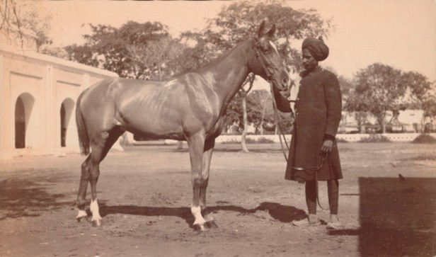 Polo pony / British India 1910